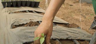 prêt agricole